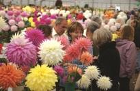 9_A08@300 © Harrogate Flower Show